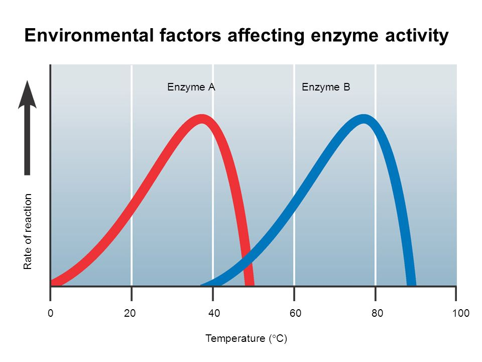 how does ph affect enzyme reactivity Factors that affect the rate of enzyme reactions 1 2 ph enzymes have an optimum ph at which they work fastest for most enzymes this is about ph 7-8.