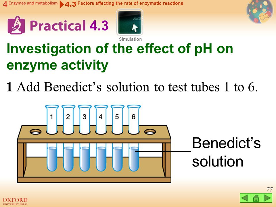 An Investigation into the Effect of Varying pH on Enzyme Activity Essay