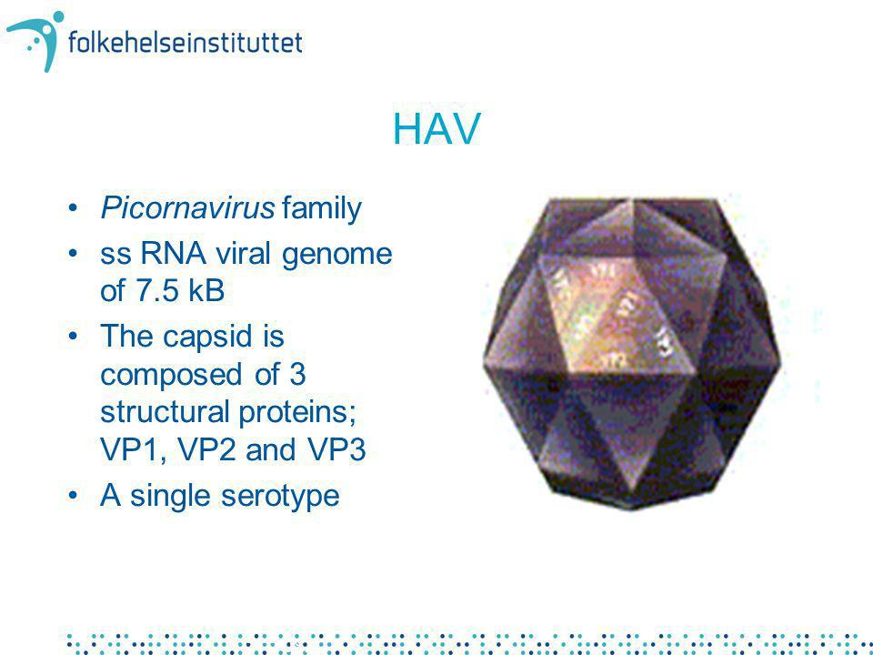 HAV Picornavirus family ss RNA viral genome of 7.5 kB