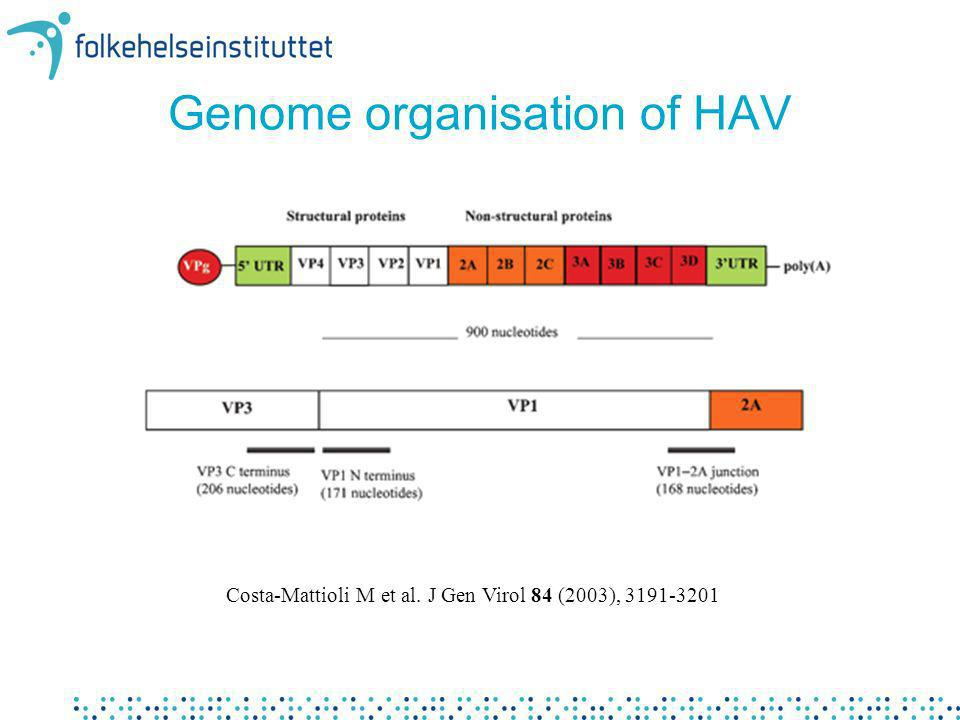 Genome organisation of HAV