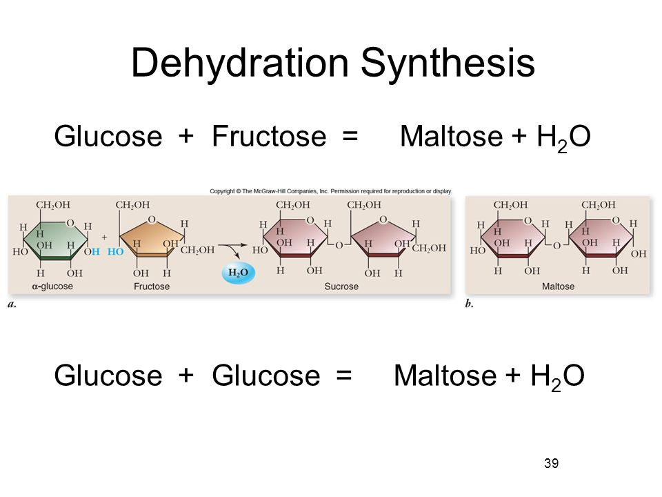 What are dehydration synthesis reactions?