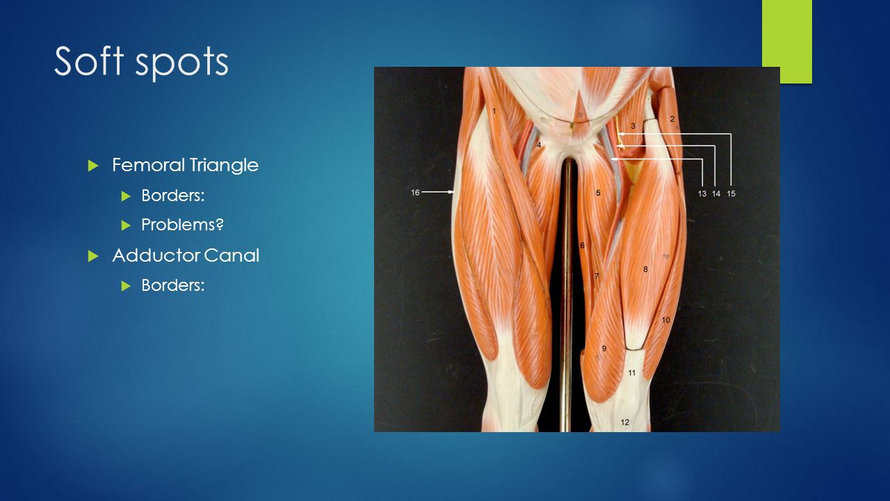 Thigh Musculature Knee And Ankle Osteology Ppt Video