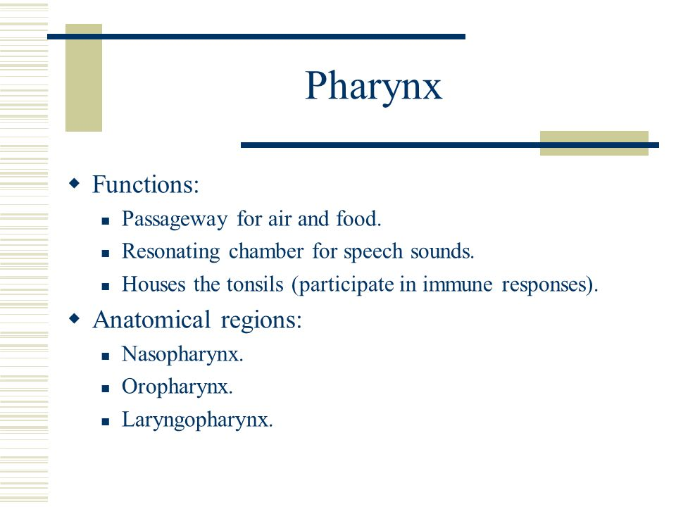 respiratory system dr. michael p. gillespie. - ppt video online, Sphenoid