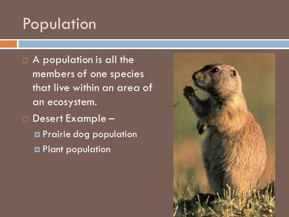 Population A population is all the members of one species that live within an area of an ecosystem.