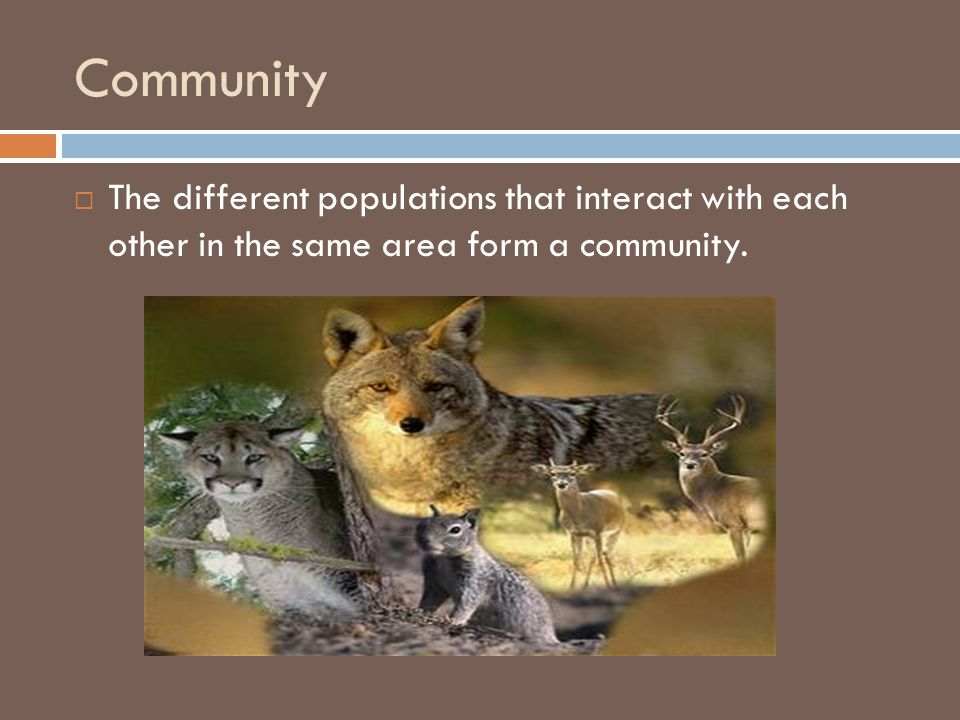 Community The different populations that interact with each other in the same area form a community.