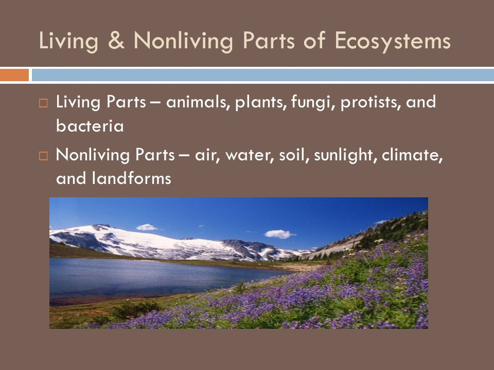 Living & Nonliving Parts of Ecosystems