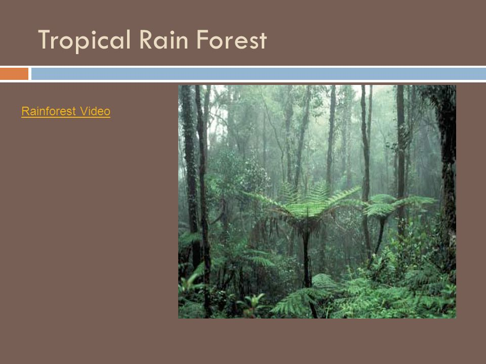 Tropical Rain Forest Rainforest Video