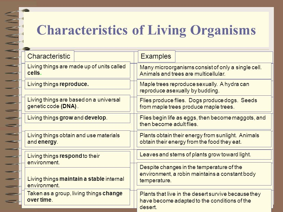 What Are Some Characteristics Shared by All Living Organisms?