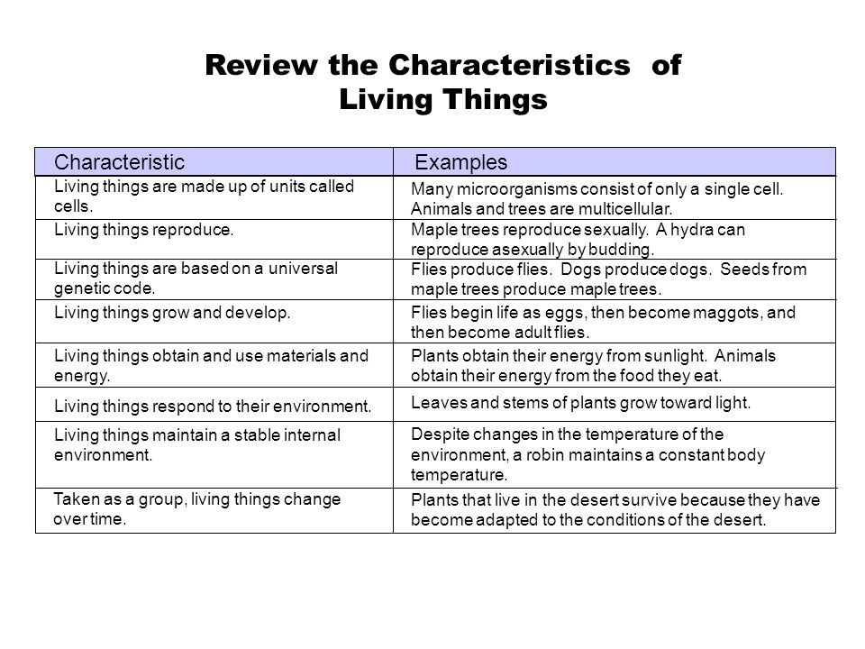 Review The Characteristics Of Living Things Ppt Video Online Download