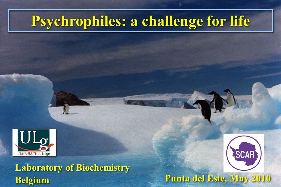 Psychrophiles: a challenge for life