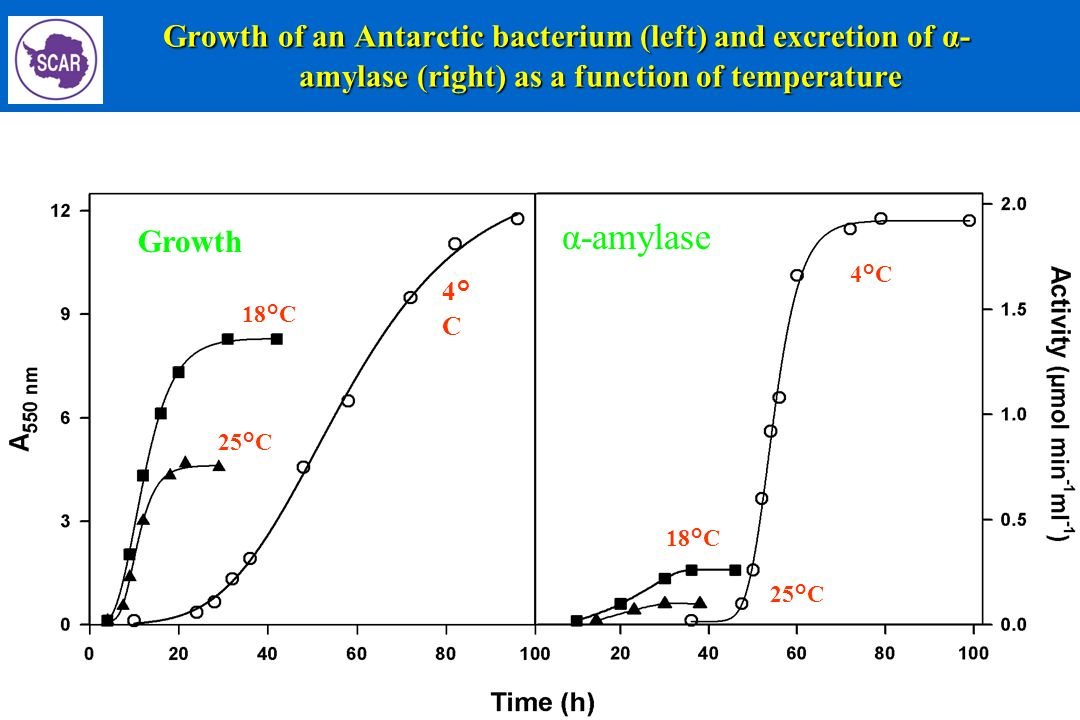 Growth of an Antarctic bacterium (left) and excretion of α-