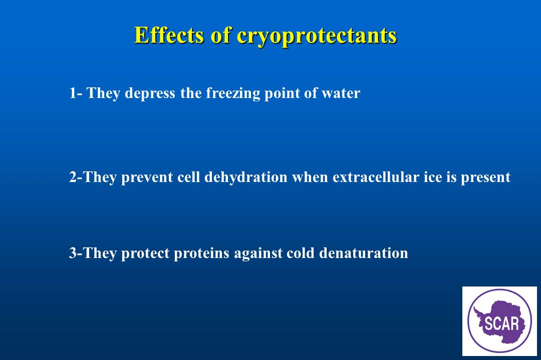 Effects of cryoprotectants