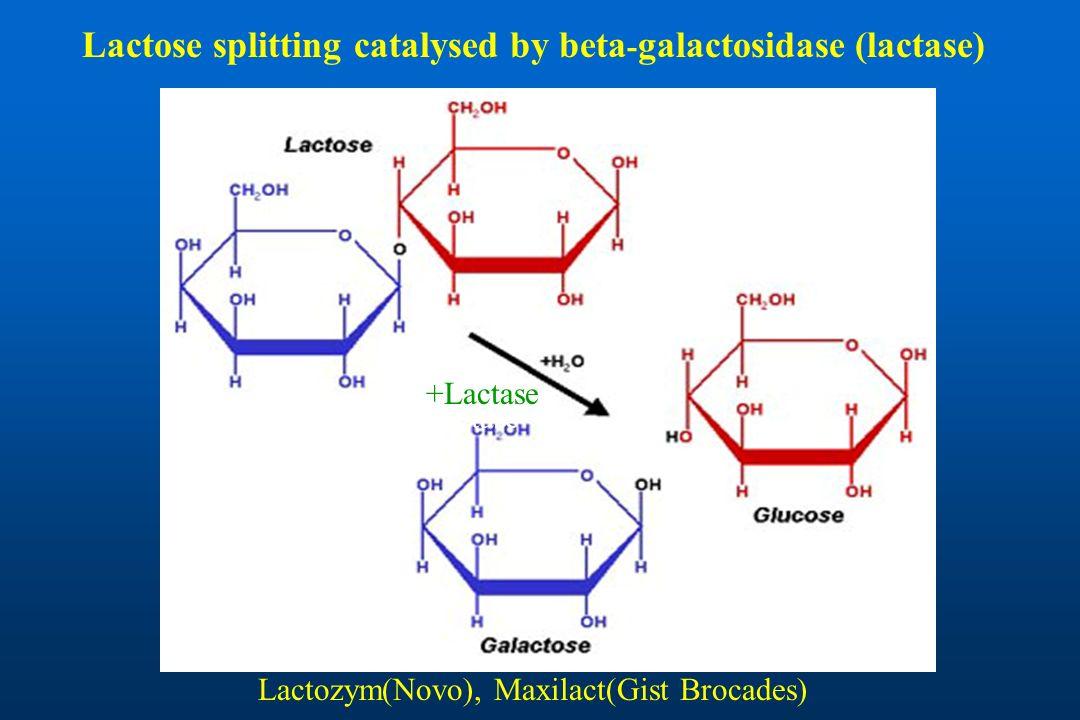 Lactose splitting catalysed by beta-galactosidase (lactase)