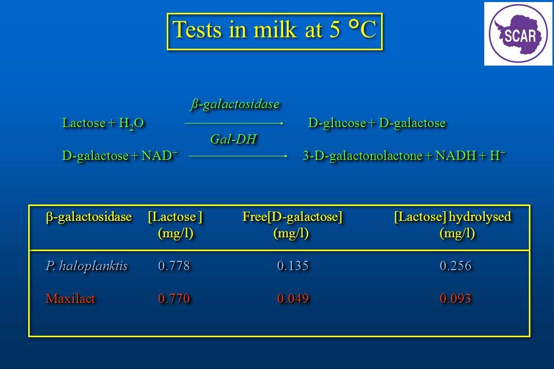 Tests in milk at 5 °C ß-galactosidase