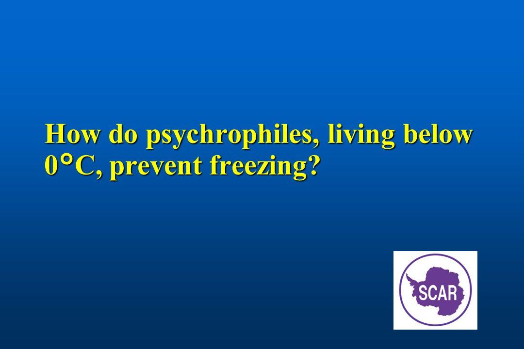 How do psychrophiles, living below 0°C, prevent freezing
