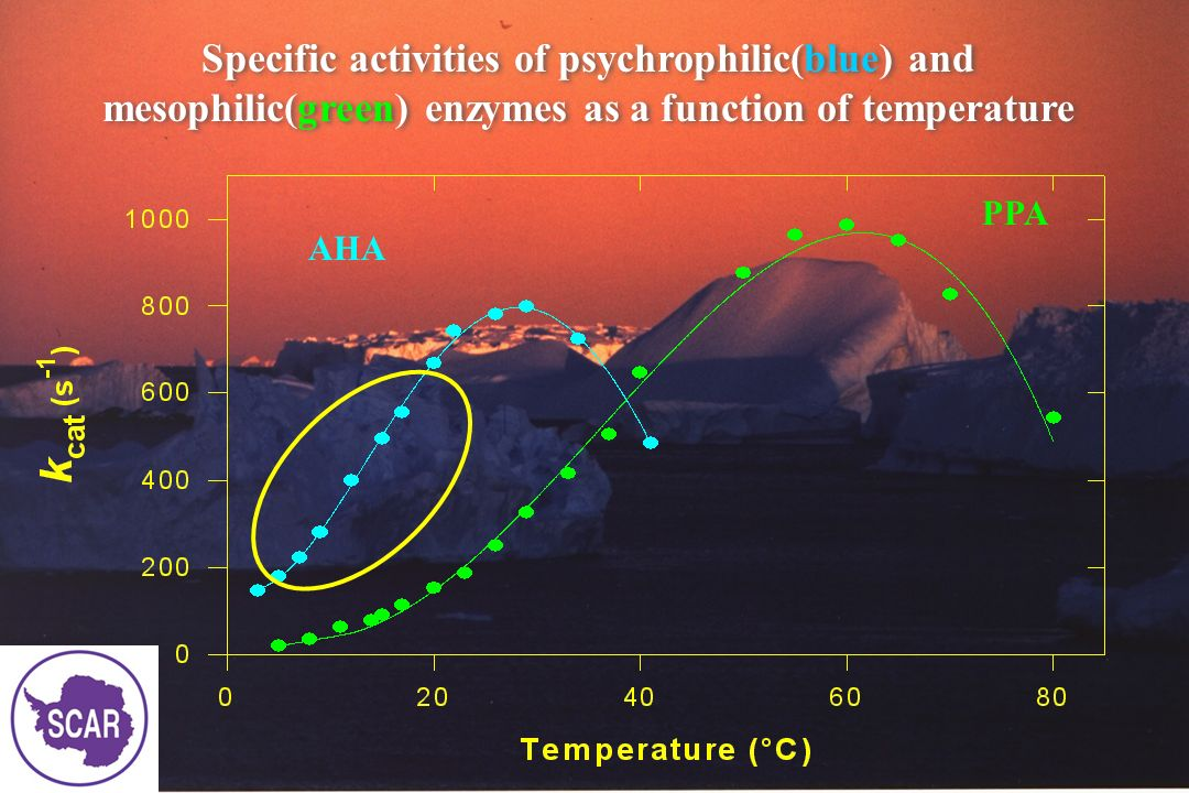 Specific activities of psychrophilic(blue) and mesophilic(green) enzymes as a function of temperature
