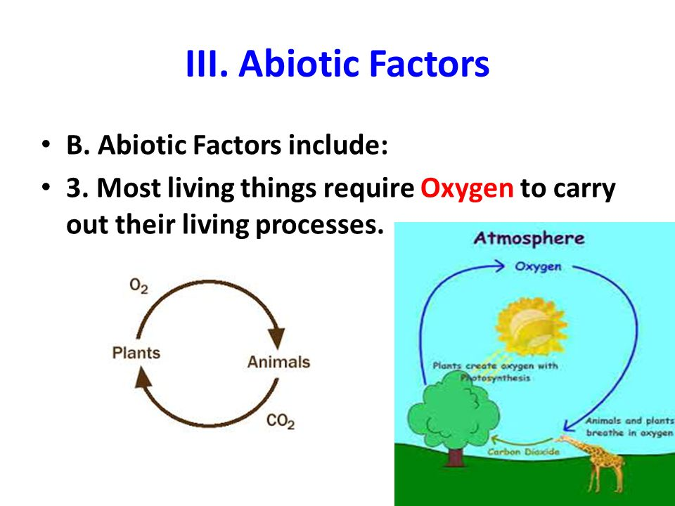 abiotic factors and its environment In our environment ideal biotic and abiotic conditions allow a species to while abiotic factors determine where a particular species is able to live.