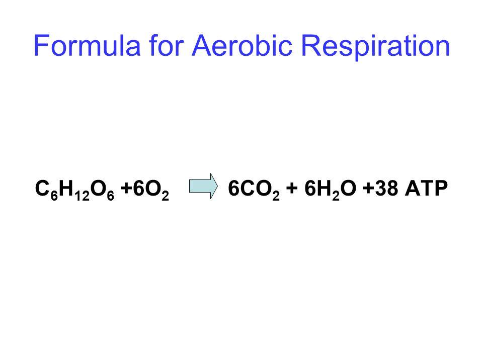 Formula for Aerobic Respiration