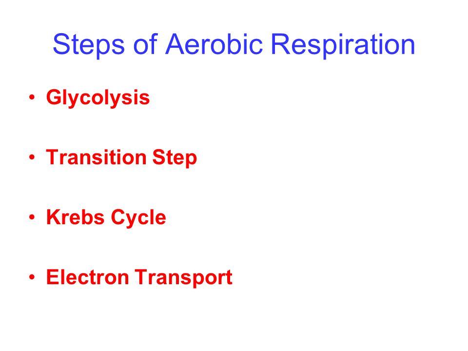 Steps of Aerobic Respiration
