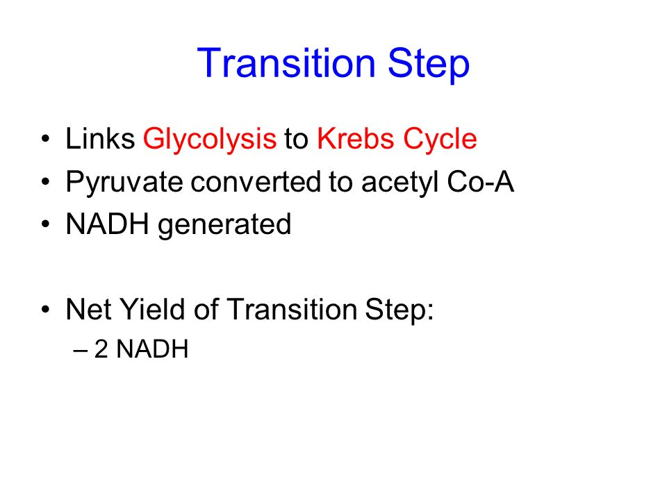 Transition Step Links Glycolysis to Krebs Cycle