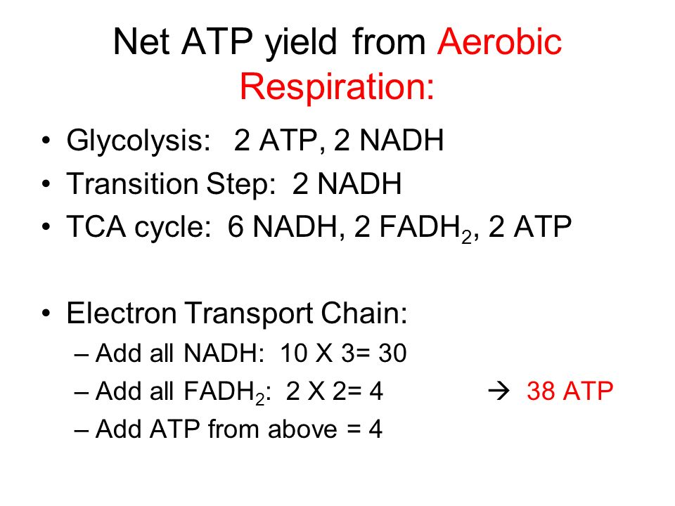Net ATP yield from Aerobic Respiration:
