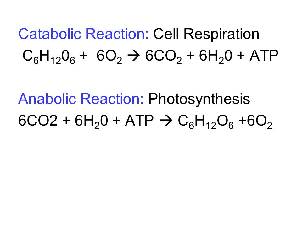 Catabolic Reaction: Cell Respiration