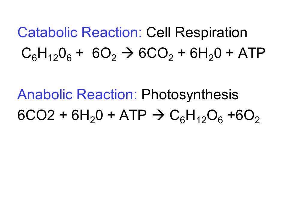 Catabolic Reaction: Cell Respiration