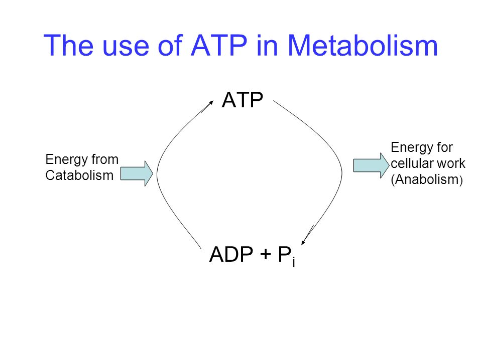 The use of ATP in Metabolism
