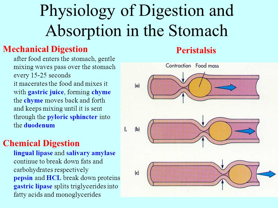 "digestion in the stomach Here are 10 causes of a bloated stomach and ways to being ""bloated"" is the feeling of having built-up gas in your digestive system that makes your stomach."