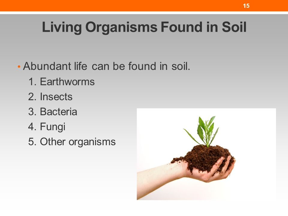 The nature of soil lesson nres b ppt video online download for Is soil living
