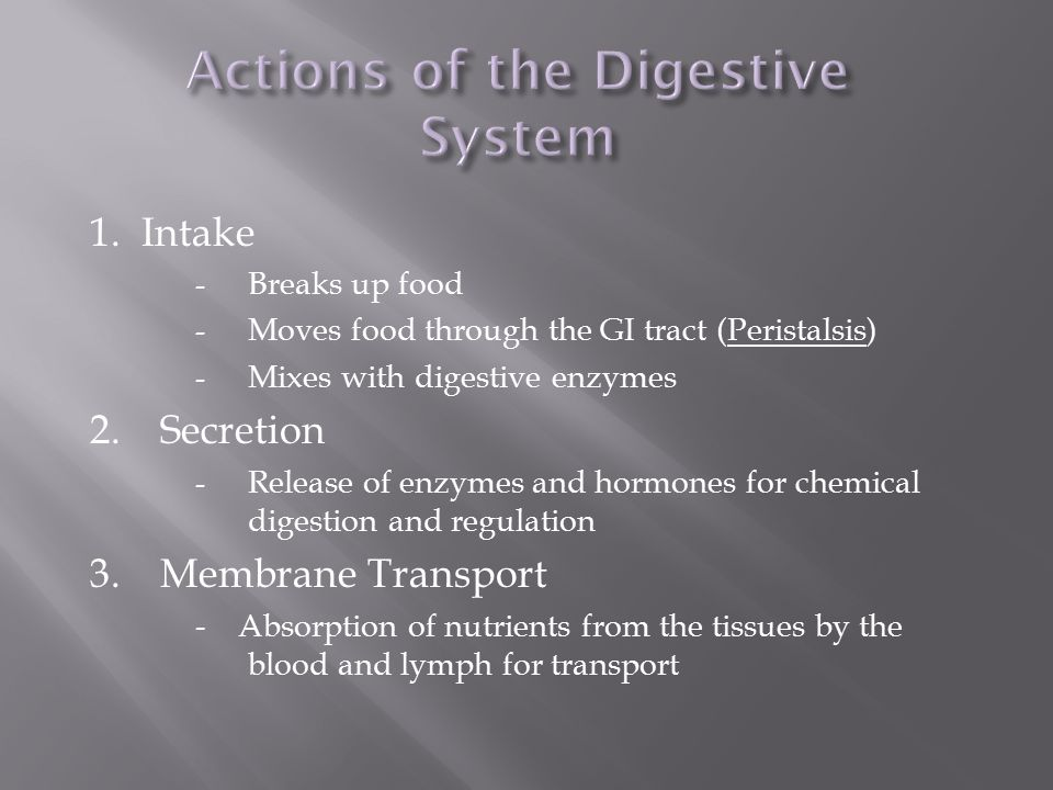 Actions of the Digestive System