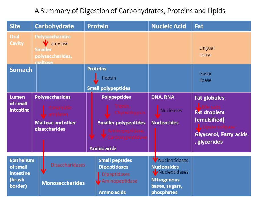 a summary on carbohydrates as the main energy source Carbohydrates are sugars that break down inside the body to create glucose glucose is moved around the body in the blood and is the primary source of energy for the brain, muscles, and other essential cells.