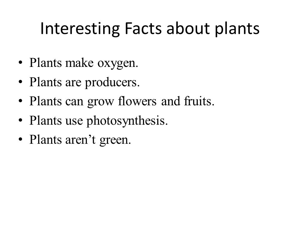 important facts about a plant Learn about science, biology and botany with interesting videos and lot of fun, facts, little known, science, biology, interesting, botany, plants, plant, plantfacts, horticulture, tree, trees, fruits, vegetables, seed, facts, about, funny, amazing, fun, strange, weird, trivia, unknown, little known, trivia, did you know, mind blowing, random.