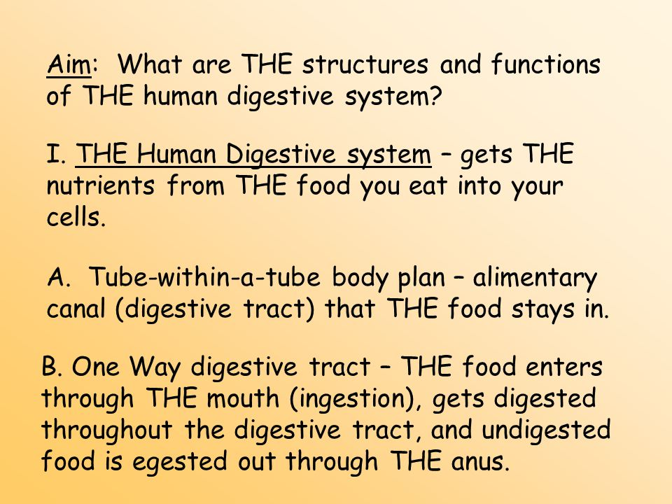 Aim: What are THE structures and functions of THE human digestive system