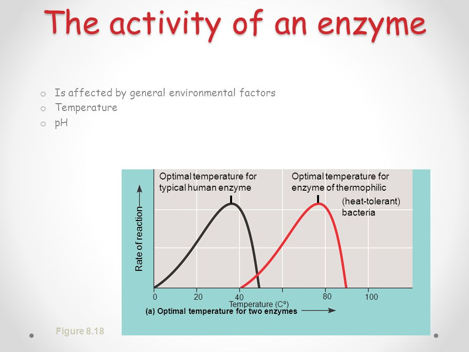 The activity of an enzyme