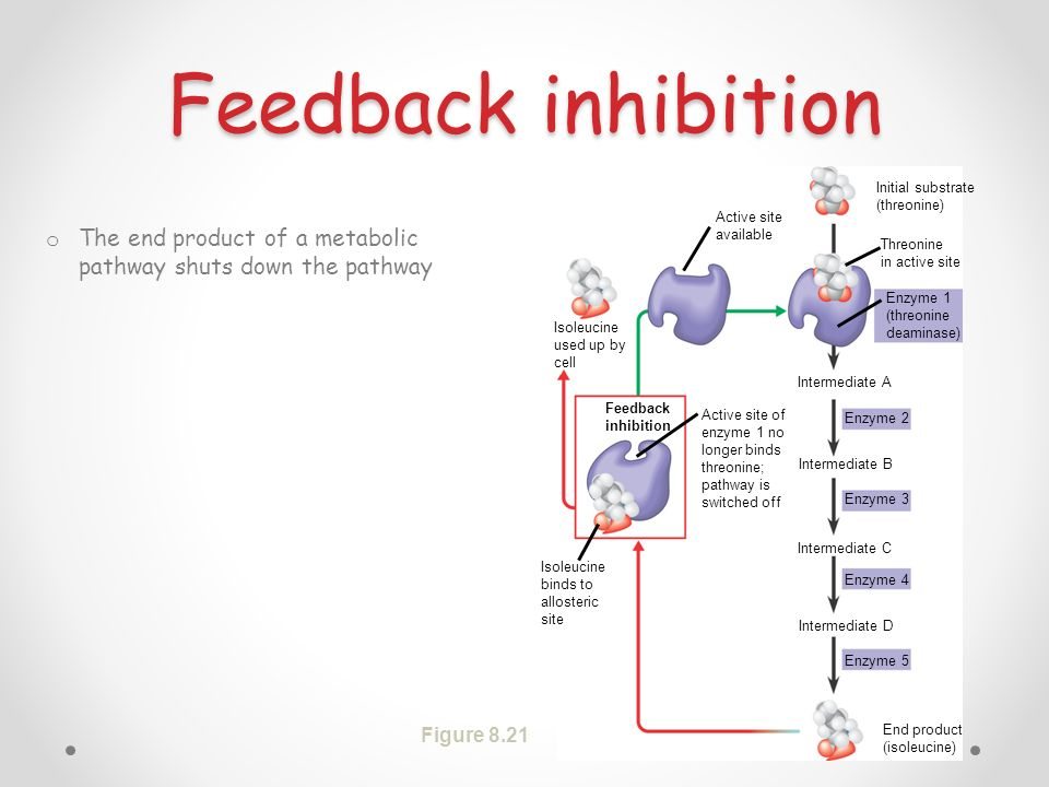 Feedback inhibition Active site available. Isoleucine used up by cell. Feedback inhibition. Isoleucine binds to allosteric site.