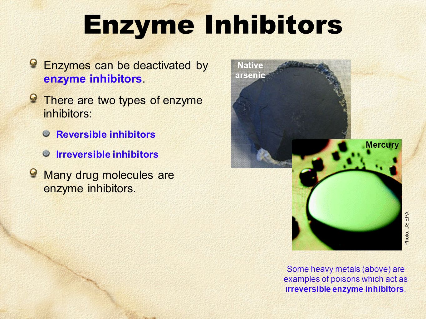 Enzyme Inhibitors Enzymes can be deactivated by enzyme inhibitors.