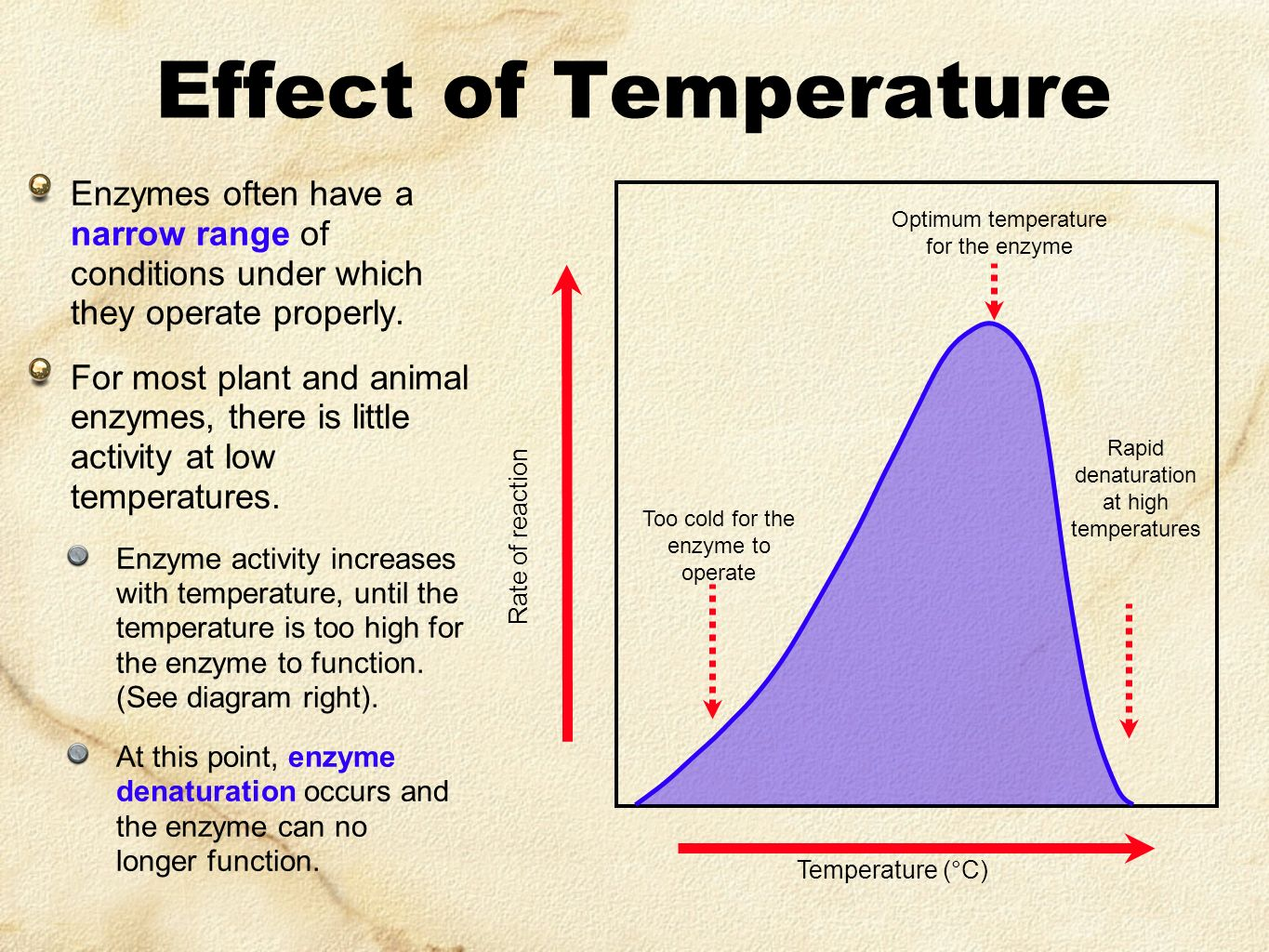 Effect of Temperature Enzymes often have a narrow range of conditions under which they operate properly.