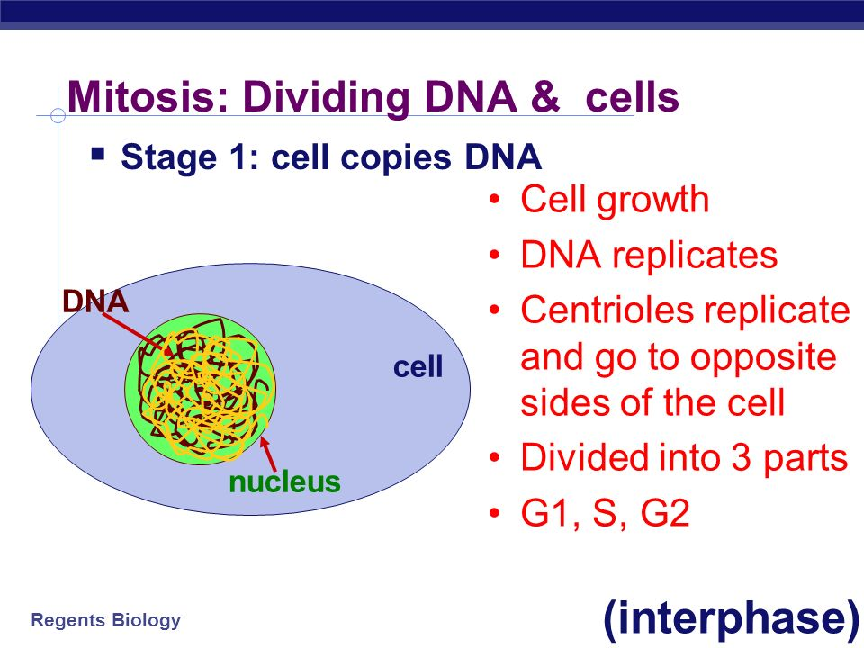 mitosis cell nucleus Cells divide and reproduce in two ways: mitosis and meiosis mitosis is a process of cell division that results in two genetically identical daughter cells.