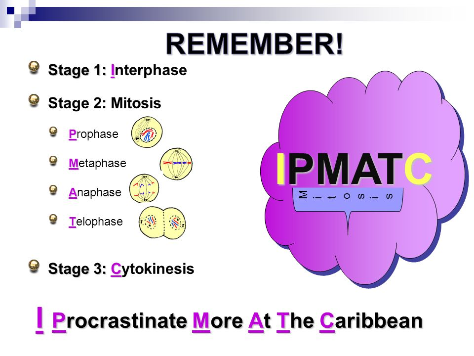 meiosis and mitosis ppt download