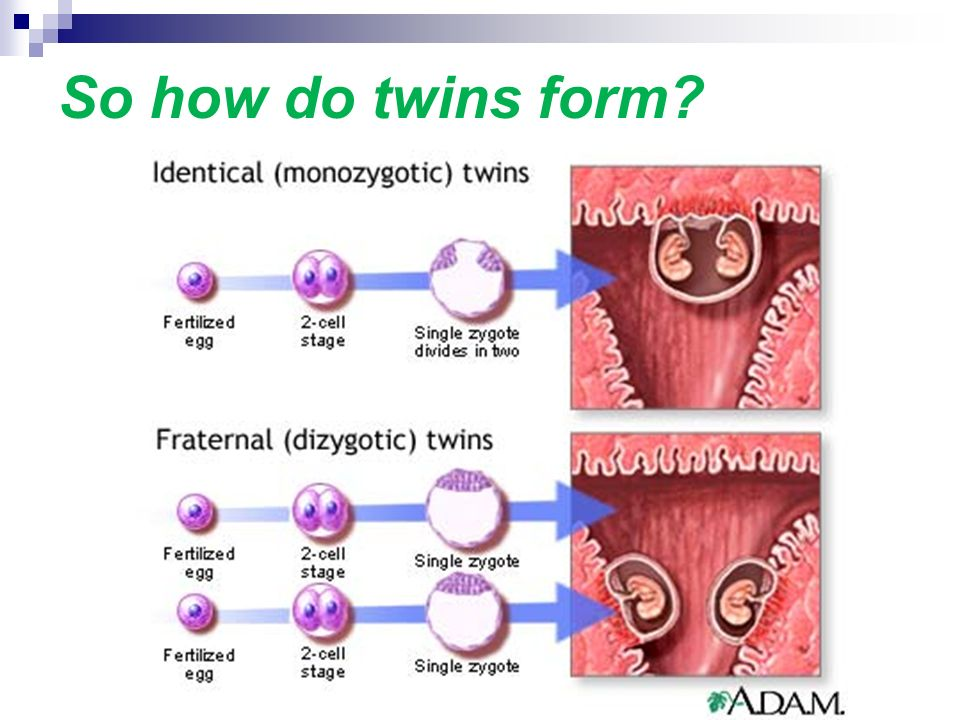 Meiosis and Mitosis. - ppt download