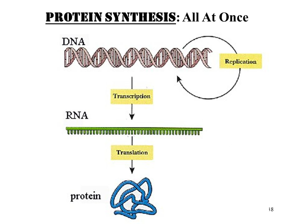 PROTEIN SYNTHESIS: All At Once