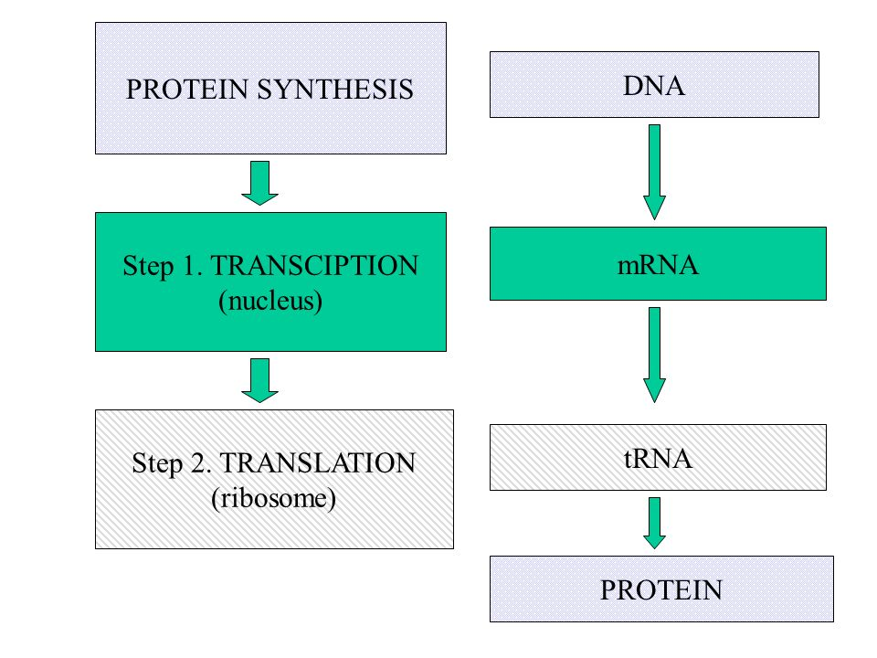 PROTEIN SYNTHESIS DNA. Step 1. TRANSCIPTION. (nucleus) mRNA. Step 2. TRANSLATION. (ribosome) tRNA.
