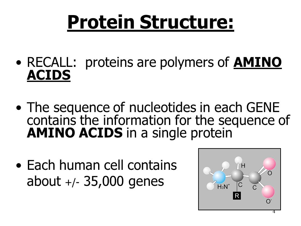 Protein Structure: RECALL: proteins are polymers of AMINO ACIDS
