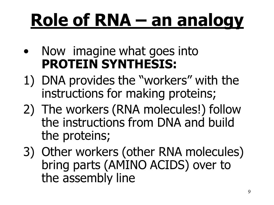 Role of RNA – an analogy Now imagine what goes into PROTEIN SYNTHESIS: