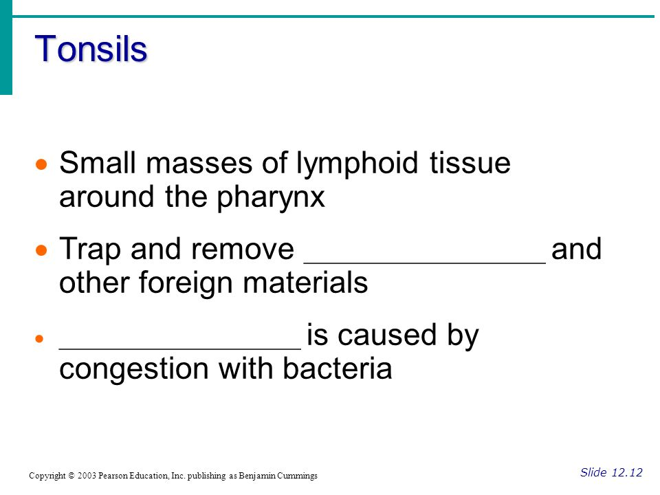 Tonsils Small masses of lymphoid tissue around the pharynx