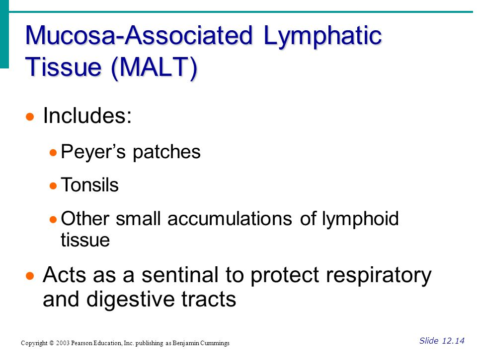Mucosa-Associated Lymphatic Tissue (MALT)