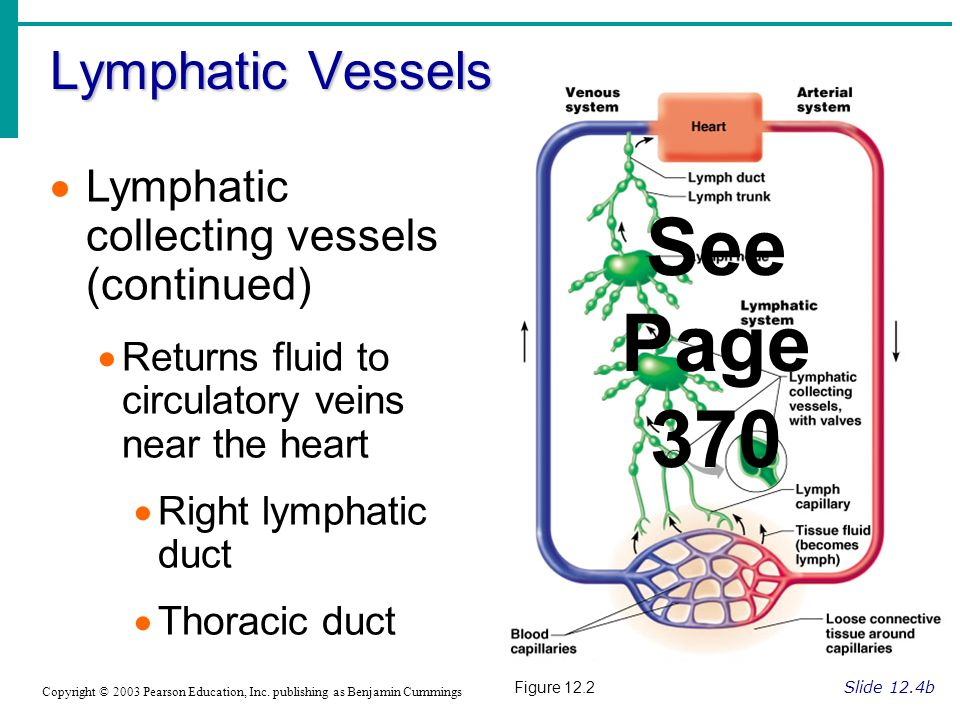 See Page 370 Lymphatic Vessels