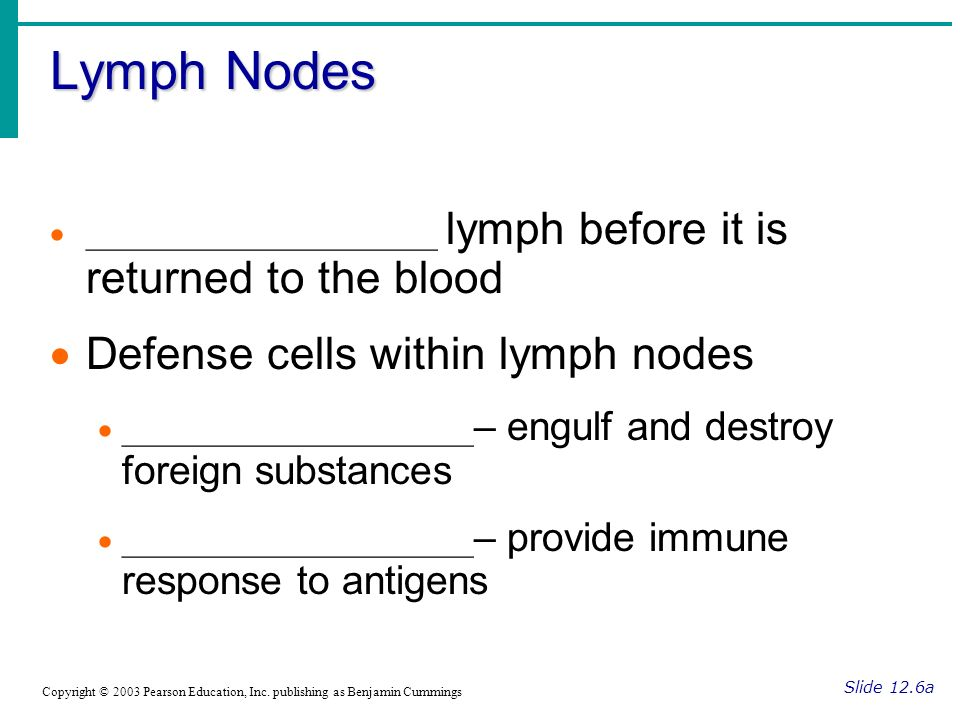 Lymph Nodes Defense cells within lymph nodes