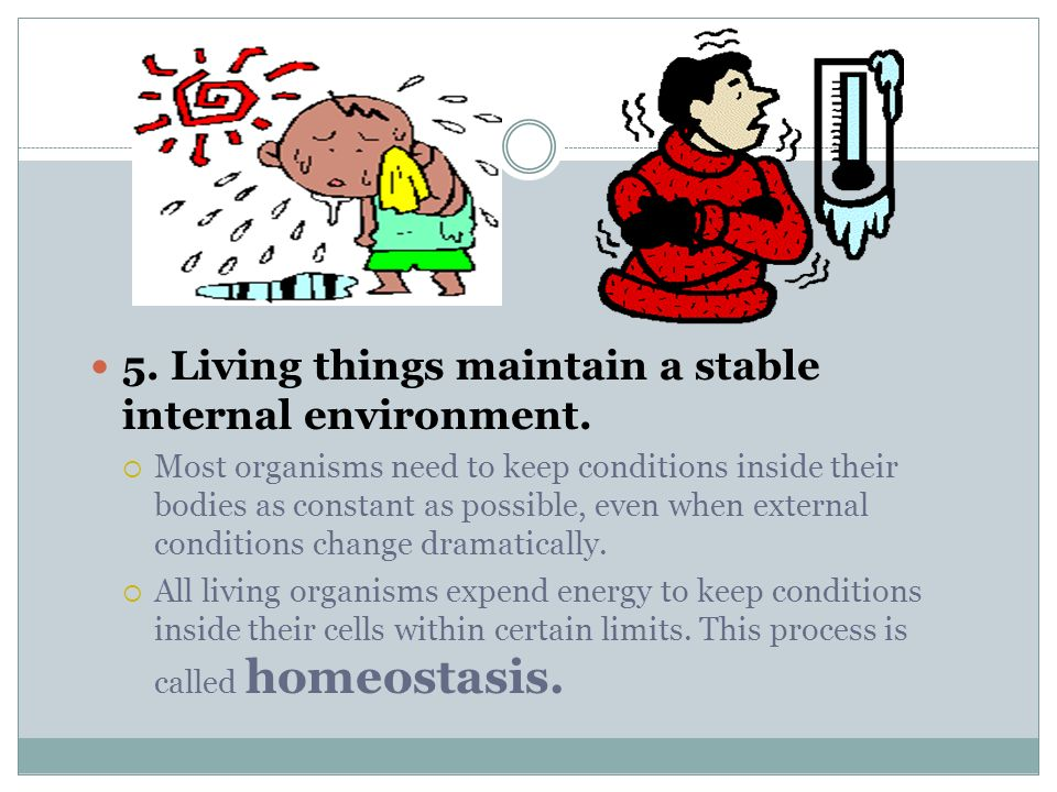 Living things maintain a stable internal environment.